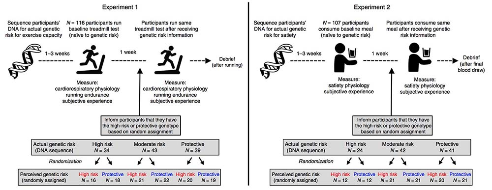 samim - Learning one's genetic risk changes physiology independent
